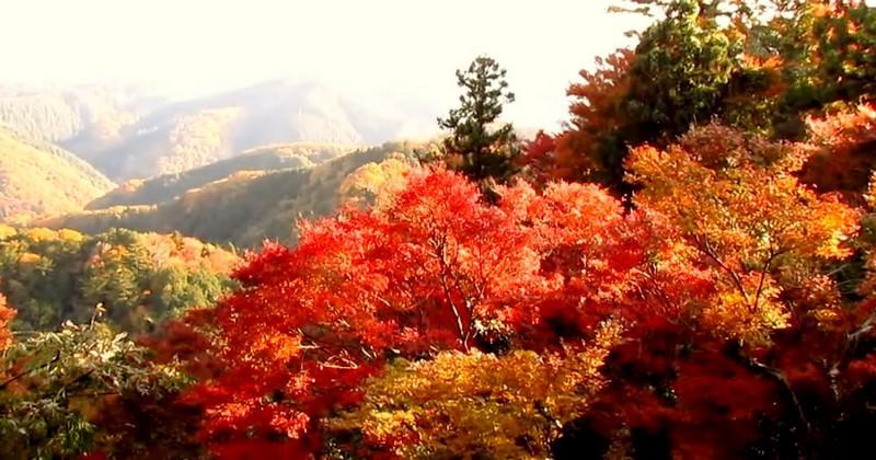 5 lieux pour admirer les superbes couleurs de l'automne pendant la Coupe du monde au Japon