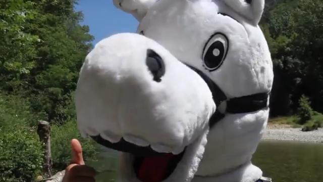 VIDEO. Top 14. La mascotte du MHR profite de la reprise pour s'envoyer en l'air