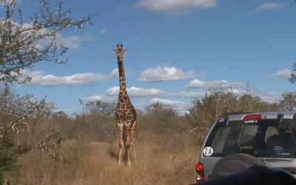 VIDEO. La sélection écossaise en safari en Afrique du Sud entre deux matchs