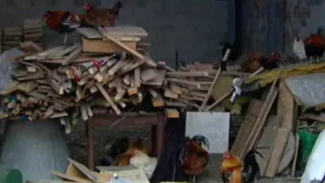 VIDEO. Faits-divers - Benazzi et Spanghero retrouvés... la tête coupée à Gaillac