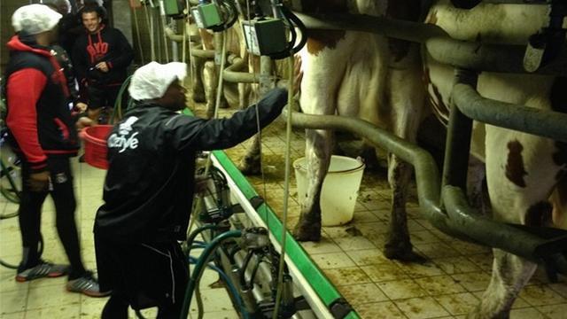 PHOTOS. Top 14 - Traite des vaches, chasse au veau et balade du fromager à Oyonnax pour préparer la saison