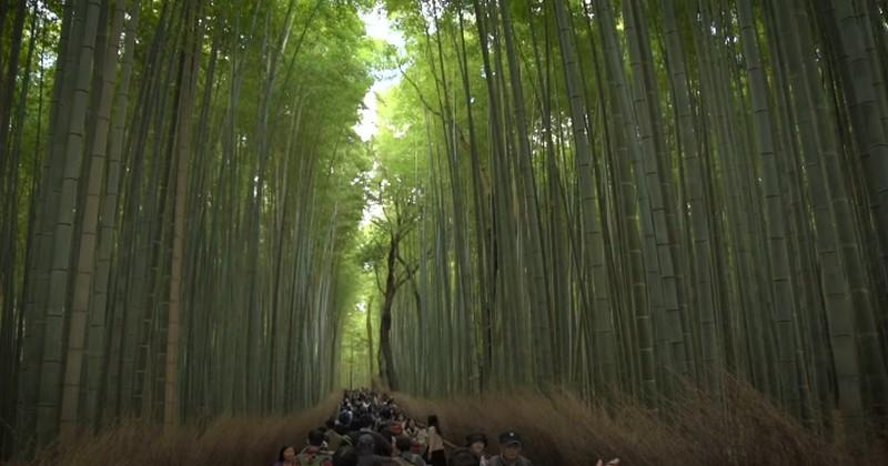 Kyoto - Top 5 des activités pour épicer votre séjour pendant la Coupe du monde
