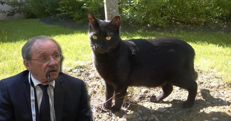Noir chatte pic seulement