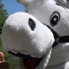 VIDEO. Top 14. La mascotte du MHR profite de la reprise pour s�envoyer en l�air