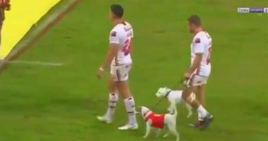 VIDEO. WTF : Micky McIlorum (Dragons Catalans) entre sur la pelouse... avec ses chiens !